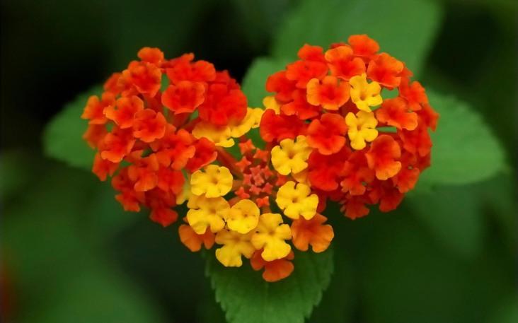 love-flowers-wallpapers